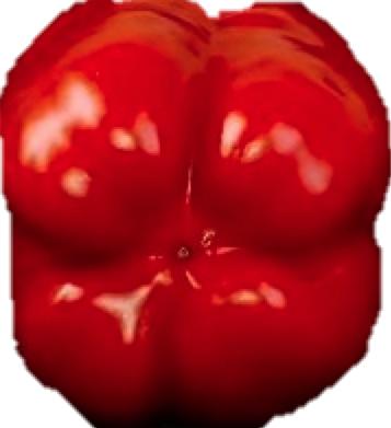 Paprika männlich