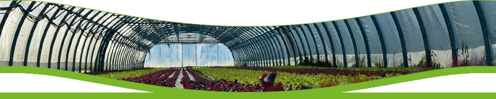 Datenschutz Hofmann Gemüse